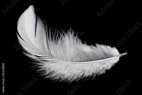 Tablou Canvas Single white feather isolated on black background