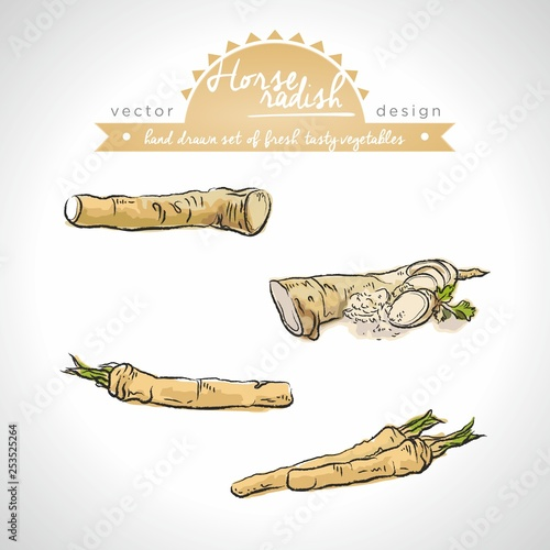 Photo Horseradish Collection of fresh vegetables with leaf