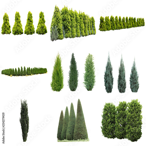 ガーデニング庭木切り抜き素材 Fototapeta