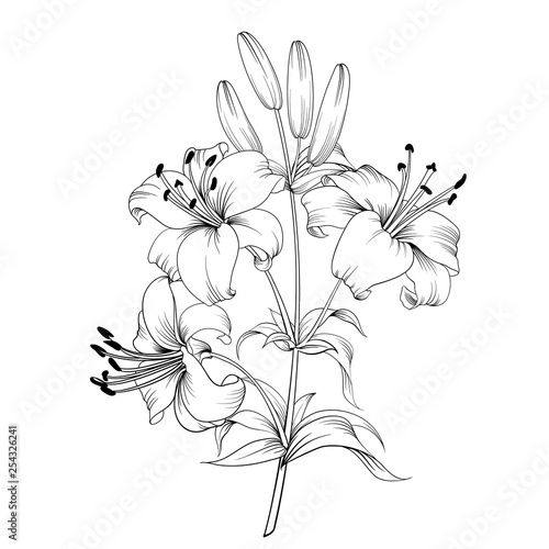 Stampa su Tela White lily isolated on a white background