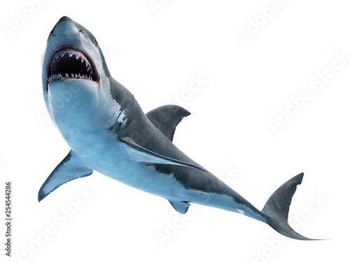 Fototapeta 3d rendered medically accurate illustration of a great white shark