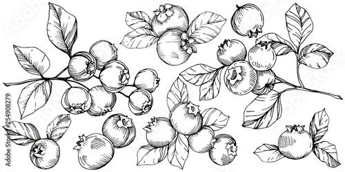 Fotografia, Obraz Vector Blueberry black and white engraved ink art