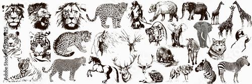 Obraz na płótnie Big collection of wild animals