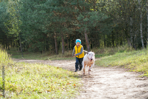 Stampa su Tela Young boy and his best friend white English bull terrier enjoying a walk in nature on a sunny summer day