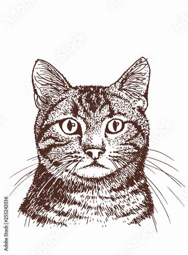 Wallpaper Mural Graphical vintage portrait of cat, sketchy illustration