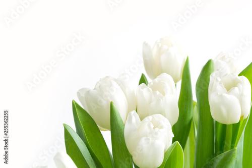 Fototapeta premium Bukiet białych tulipanów na białym tle. Kwiatowy wzór. Miejsce na tekst.