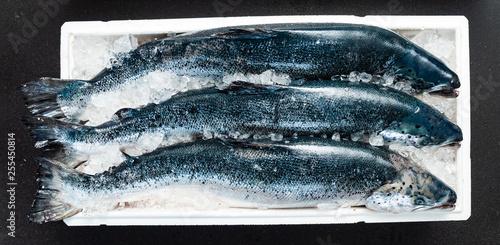Foto raw salmon fish on the ice