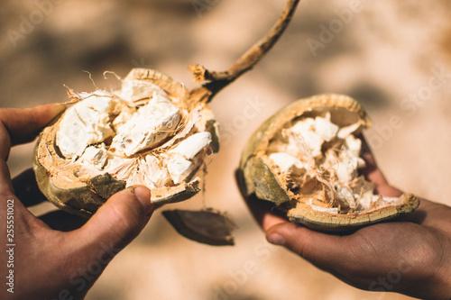 Obraz na płótnie baobab in africa