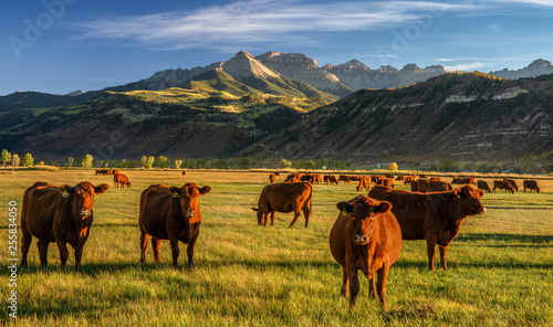 Fotografie, Tablou Autumn at a cattle ranch in Colorado near Ridgway - County Road 12