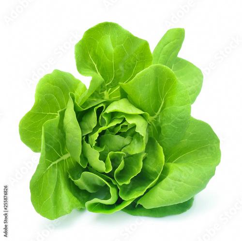 Wallpaper Mural Butter head lettuce vegetable for salad on white back ground