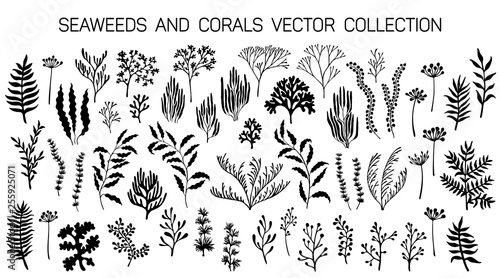 Canvas Print Seaweeds and coral reef underwater plans vector collection.