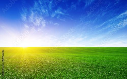 Fotografie, Obraz Green meadow and sun.