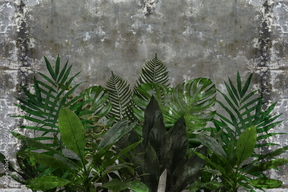 3d wallpaper, green leaves of houseplants on concrete wall textured background. The original panel will turn your room in with the most recent world trends in interior fashion.