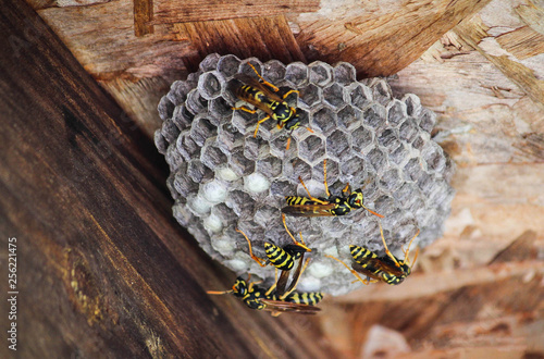 Fényképezés wasps nest