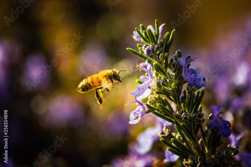 Fotografia bee on a flower