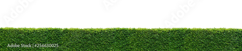 Fotografia, Obraz Long leaf wall isolated on white background