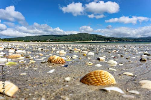 Fotografia A lot of seashells on the Atlantic beach at low tide.