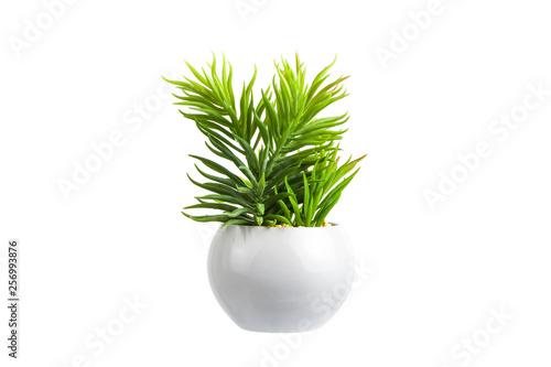 Fotografie, Obraz Flowers in a white pot