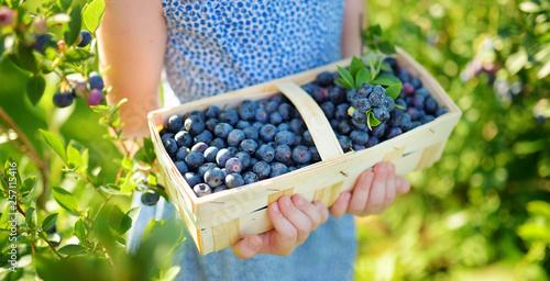 Obraz na płótnie Cute little girl picking fresh berries on organic blueberry farm on warm and sunny summer day