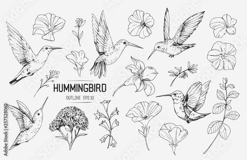 Fotografia Hummingbirds and tropical flowers