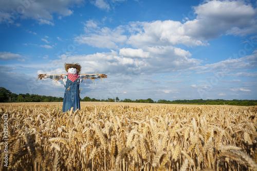 Obraz na płótnie Scarecrow in a Wheatfield