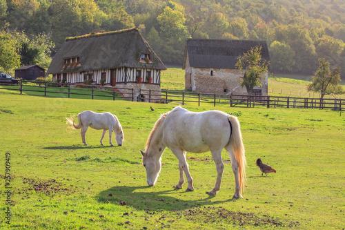 Canvas Print Horse on the Marais Vernier, Normandy, France