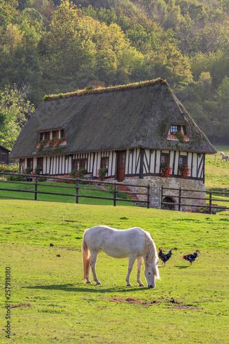 Wallpaper Mural Horse on the Marais Vernier, Normandy, France