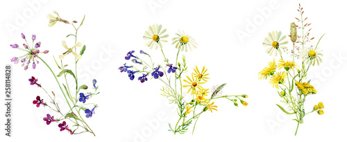 Canvas Print Watercolor multicolored bouquets of wild flowers
