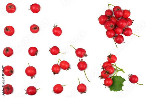 Fototapeta Hawthorn isolated on white, top view, flat lay