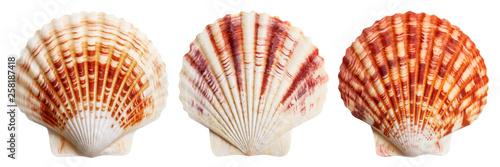 Fotografering Set of sea shells, isolated on white background