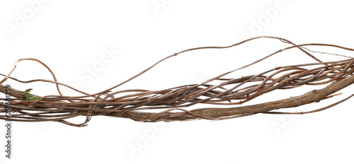 Photographie Wild dry liana, jungle vine isolated on white background, clipping path