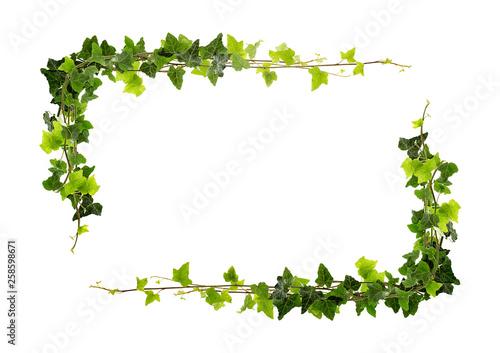 Leinwand Poster Frame of ivy