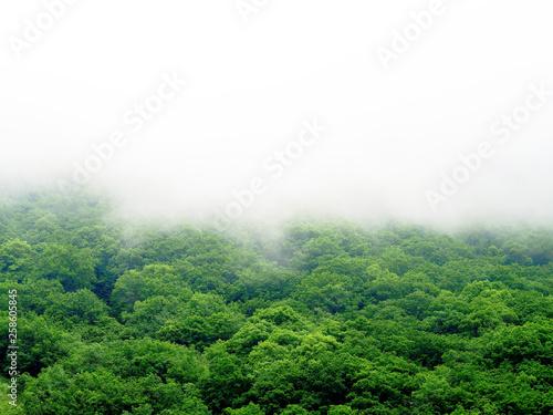 Canvas Print Fog covered mountains, rainforest landscape