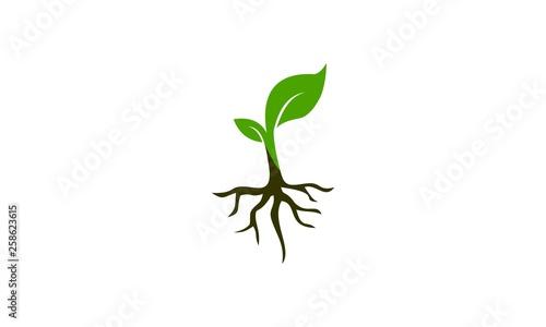 Canvas Print seed plant design logo