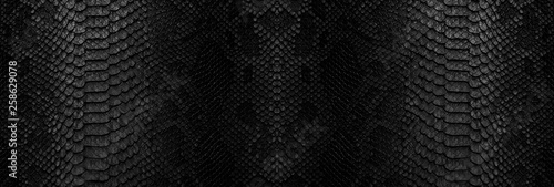 Canvas Print Snake skin background. Panoramic web banner with copy space.