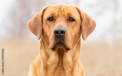 Canvas Print Portrait of a dog