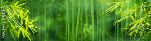 Slika na platnu Bamboo forest