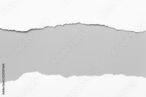 Carta da parati white torn paper on gray background. collection paper rip