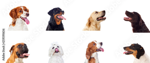 Fényképezés Pensive different dogs looking up