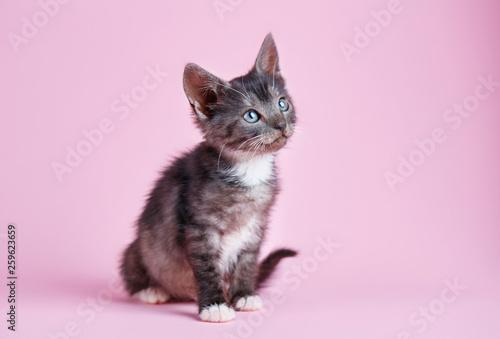 Stampa su Tela Fluffy playful kitten