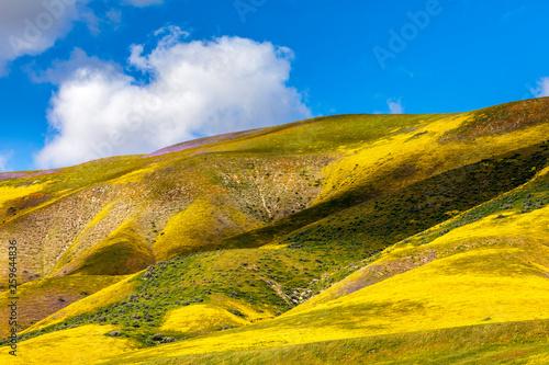 Wallpaper Mural Yellow Hillside of Blossoms in Mountain Range