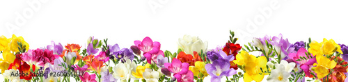 Beautiful spring hyacinth flowers isolated on white