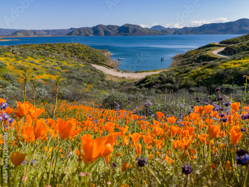 Obraz na plátně Close up shot of poppy flower blossom at Diamond Valley Lake