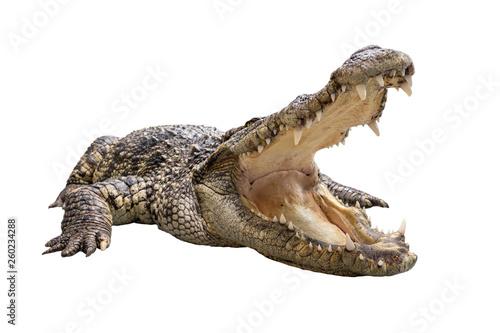 Wallpaper Mural A wide open mount crocodile