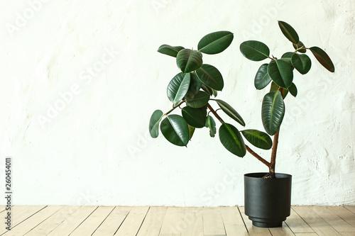 Wallpaper Mural Pot with green plant on wooden floor in room