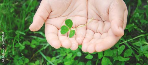 Canvas Print Clover leaf. Happy St. Patrick's Day. Selective focus.