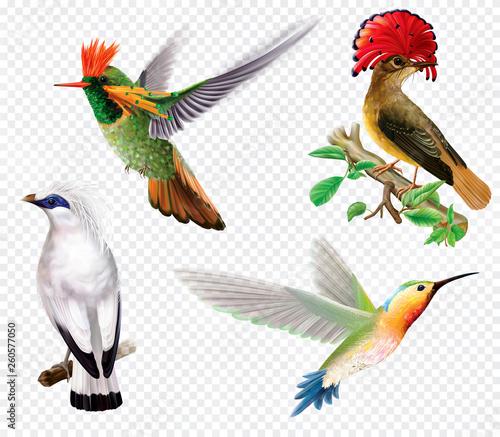 Fotografia Tropical birds and hummingbird on a transparent background