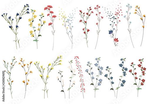 Canvas Print Big set botanic blossom floral elements