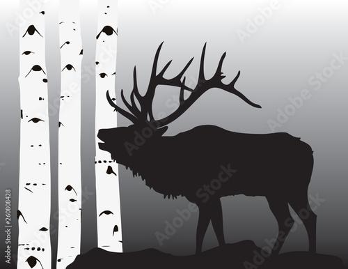 Elk coming through the aspesns Fototapet