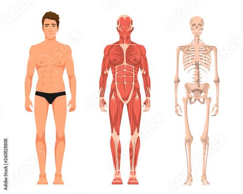 Wallpaper Mural Vector illustration of man anatomy